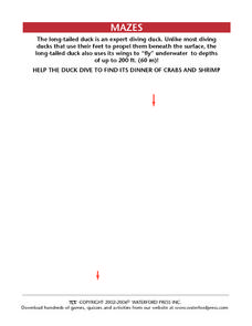 Long-tailed Duck Maze Worksheet