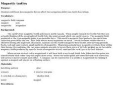 Magnetic Turtles Lesson Plan