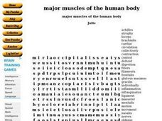 Major Muscles of The Body Worksheet