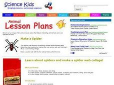 Make a Spider Lesson Plan