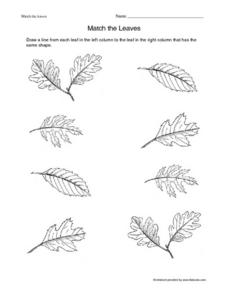 Match the Leaves- Same Shapes Worksheet