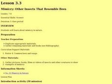 Mimicry: Other Insects That Resemble Bees Lesson Plan