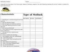 Mollusks Orders Worksheet
