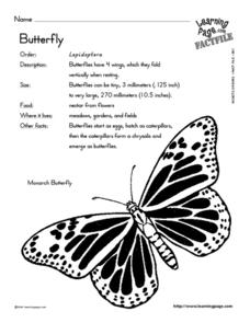 Monarch Butterfly Fact File Worksheet