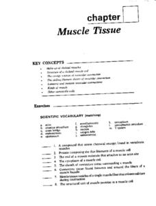 Muscle Tissue Worksheet