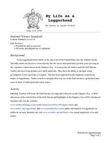 My Life as a Loggerhead Lesson Plan