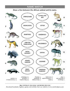 Name Match: African Mammals Lesson Plan