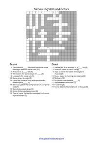 nervous system and senses 6th 8th grade worksheet lesson planet. Black Bedroom Furniture Sets. Home Design Ideas