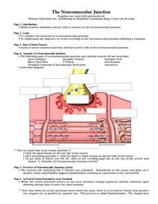 Neuromuscular Junction 9th - 12th Grade Worksheet | Lesson Planet