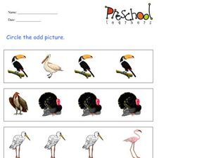 Odd Pictures: Birds Worksheet