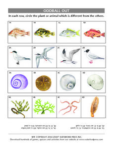 Oddball Out: Sea Animals Lesson Plan