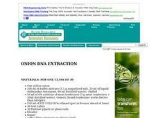 Onion DNA Extraction Lesson Plan