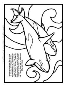 Orca Whale Information and Coloring Page Worksheet