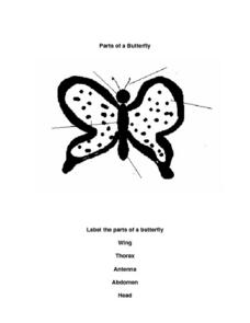 Parts of a Butterfly Worksheet