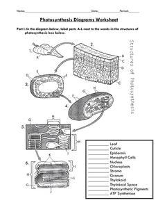 photosynthesis diagrams worksheet 7th 12th grade worksheet lesson planet. Black Bedroom Furniture Sets. Home Design Ideas
