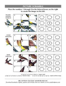 Picture Scramble Puzzle- Warbler, Cedar Waxwing, Bank Swallow Lesson Plan