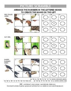 Picture Scramble:  Red-tailed Hawk, Elf Owl, Sharp-shinned Hawk Lesson Plan