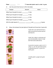 Plant Activity Worksheet