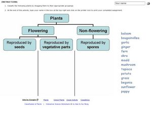 plant classification 3rd 6th grade worksheet lesson planet