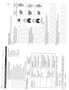 Plant Responses and Adaptations Worksheet