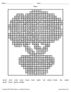Plant Word- Word Search Worksheet