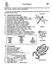 Pond Insects Lesson Plan