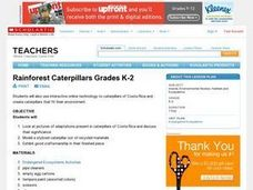 Rainforest Caterpillars Grades K-2 Lesson Plan