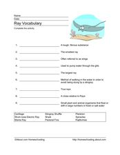 Ray Vocabulary Worksheet