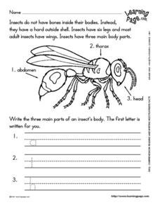 Reading and Writing About Insects Worksheet