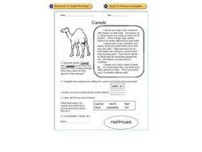 Reading Comprehension - Camels Worksheet