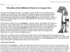 Reading Comprehension: The Jobs of the Different Parts of a Canopy Tree Worksheet