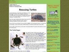 Rescuing Turtles Lesson Plan