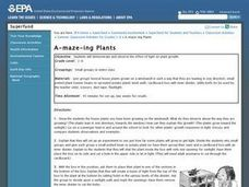 Science: A-maze-ing Plants Lesson Plan