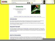 Science: How to Identify Insects Lesson Plan