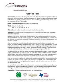 """Sea"" Me Race Lesson Plan"