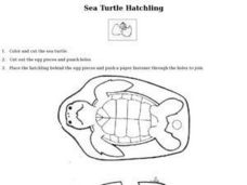 Sea Turtle Hatchling Lesson Plan