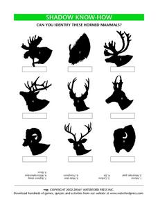 Shadow Know-How: Horned Animals Lesson Plan