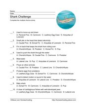 Shark Challenge Worksheet