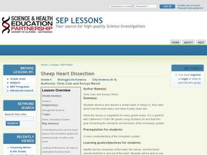 Sheep Heart Dissection Lesson Plan