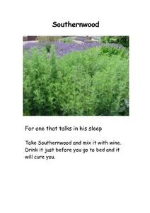 Southernwood, Mint and Sage Worksheet