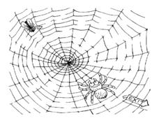 Spider and Fly Maze Worksheet