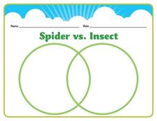 Spider vs. Insect Worksheet