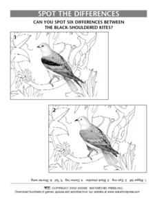 Spot the Differences Between The Two Black-Shouldered Kites Lesson Plan