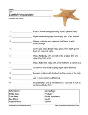 Starfish Vocabulary Worksheet