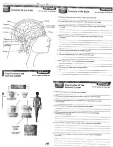 Structure of the Brain Worksheet
