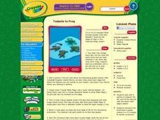 Tadpole to Frog Lesson Plan