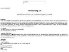 The Amazing Ant Lesson Plan