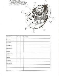The Animal Cell Worksheet