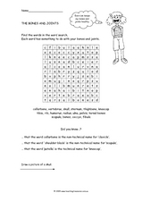 The Bones and Joints Worksheet