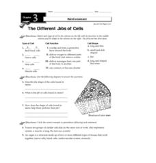 The Different Jobs of Cells Worksheet